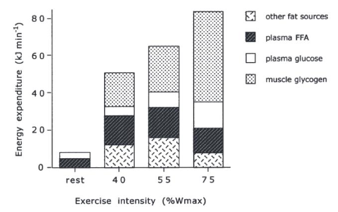 Gasto de energía y sustrato energético utilizado en función de la intensidad de ejercicio